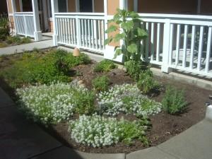 Healer's Garden 06-27-14
