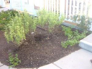 Healer's Garden 022815